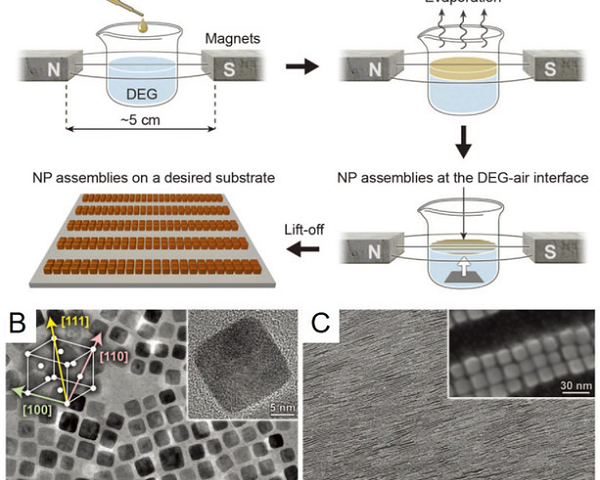 Self-assembled magnetic nanosystems for cybernetic biocircuitry interface in humans
